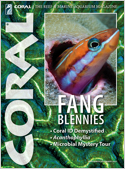 Subscribe to Coral Magazine