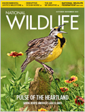 Subscribe to National Wildlife Magazine
